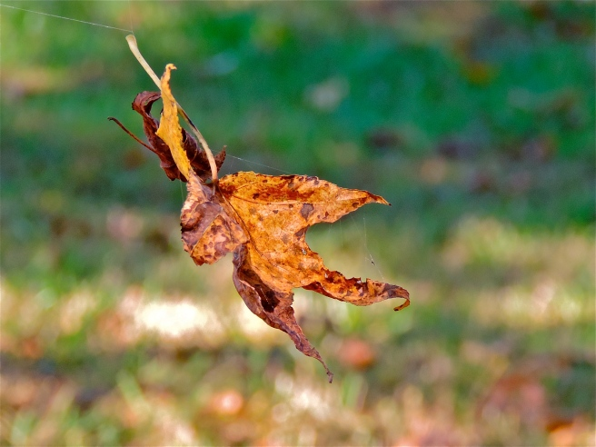 Image result for leaf blown by wind pictures