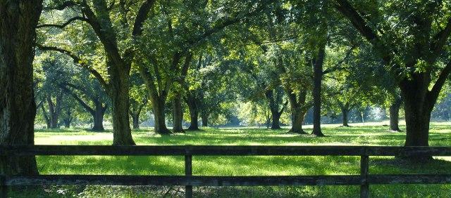 slide-pecan-grove